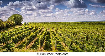 כרם, בורדו, עלית שמש, צרפת