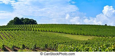 כרם, landscape-bordeaux, -, עלית שמש