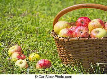 לאחרונה, תפוחי עץ אדומים, ב, ה, מעץ, סל, ב, דשא ירוק