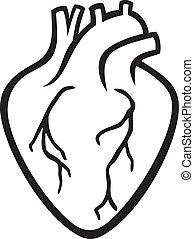 לב, בן אנוש