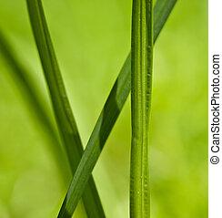 להב, דשא ירוק
