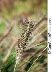 להב, דשא