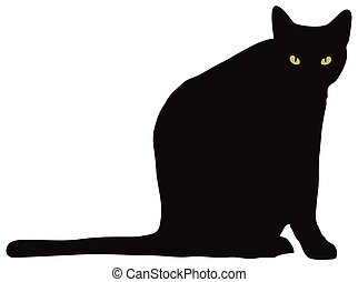 להסתכל, מצלמה, חתול שחור