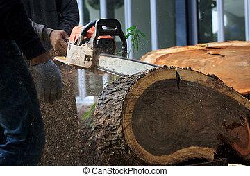לחתוך, עץ, שלשל, איש, ס.ה., עובד