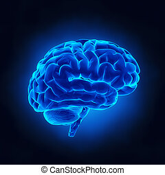 מוח אנושי, רנטגן, הבט