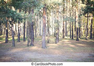 מוקדם, יער, דאב, בוקר