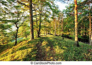 מוקדם, עלית שמש, יער, דאב, בוקר