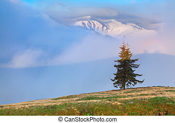 מוקדם, קפוץ, הרים., עלית שמש