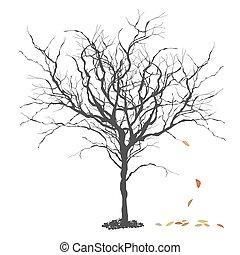 מושג, תבל, דוגמה, סתו, fall., עץ.