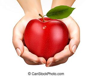 מושג, תפוח עץ, בשל, אדוורד, diet., vector., hands.