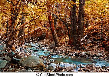 מיסטיקן, יער