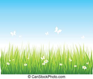 מכוסה עשב, תחום ירוק, וכחול, שמיים