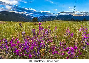 מכחול הודי, פרחים, קולורדו, נוף