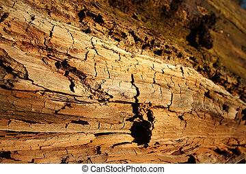 מעץ, nature., עץ, ללא מגע, רקע., פראי