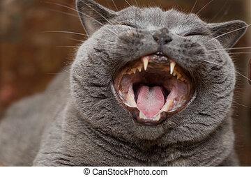 מצחיק, חתול