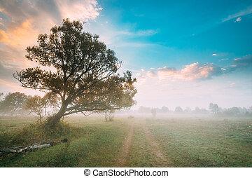 נוף., אחו, מעורפל, ארץ, מעל, עץ, בוקר, סתו, לגדול, שמיים, עלית שמש, road.
