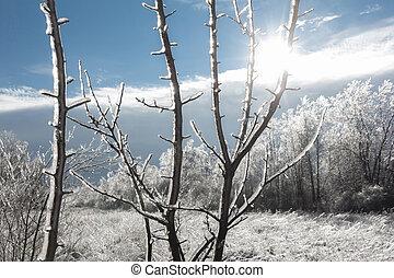 נוף של חורף, עם, שמש מאירה, דרך, ice-covered, ענפים