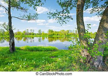 נוף., narew, קפוץ, עצים, river., גדת נהר