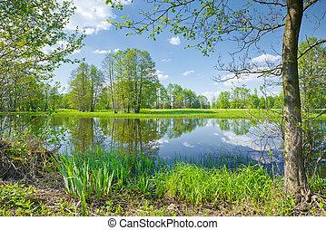 נחל, scenery., reserve., narew, טבע