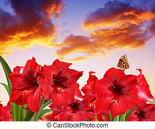 נרקיס, פרחים, אדום, butterfly.