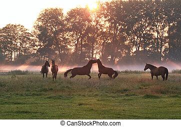 סוסים, לקפוץ, ערפל, עלית שמש, לשחק