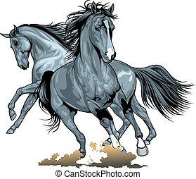 סוסים פראים