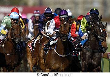 סוסים, head-on., רוץ, פעולה, במשך, צרור