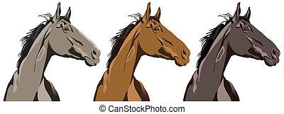 סוס, דמות