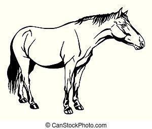 סוס, לעמוד, וקטור