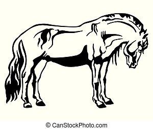 סוס, 2, לעמוד, וקטור