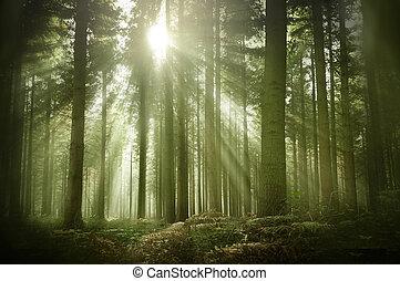 סתו, אור שמש, ישן, יער, דאב