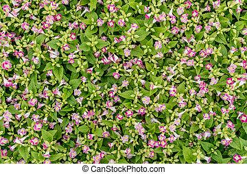 עוזב, פרחים, ירוק