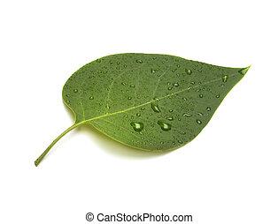 עלה ירוק