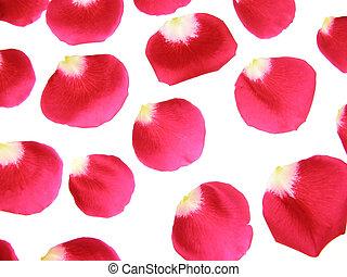 עלה, פרחים, אדום, עלהי כותרת