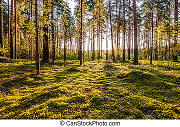 עלית שמש, ב, דאב יער