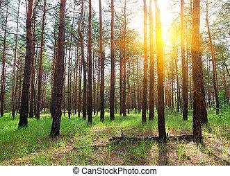 עלית שמש, ב, a, דאב יער