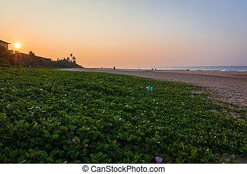 עלית שמש, על החוף, ב, סרי לנקה