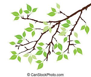ענף של עץ