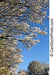 ענפים, השלג