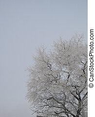 עץ של חורף