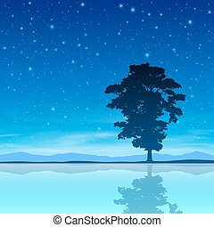עץ, שמיים, לילה