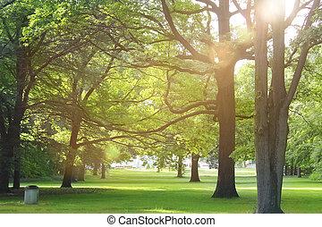עצים, ב, a, קיץ, יער