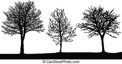 עצים של חורף