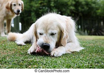 עצם של כלב, ראטריאואר