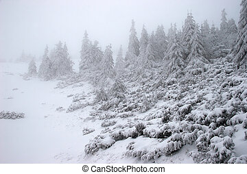 פ.י.ר., סופת שלג, חורף, יער