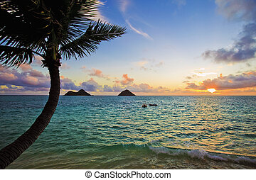 פציפי, עלית שמש, ב, lanikai, הוואי