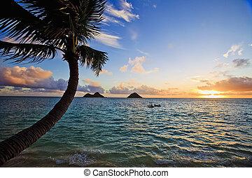 פציפי, lanikai, עלית שמש, הוואי