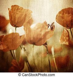 פרג, פרחים, vinatge, תחום