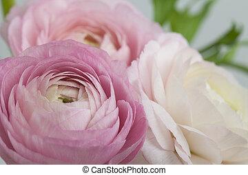 פרחים, אומנות, חתונה, חופשה, כרטיס, design.