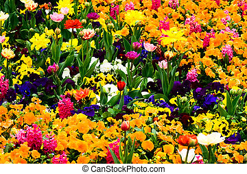 פרחים, גן, מלא